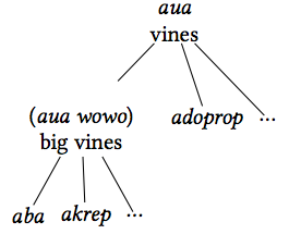 Taxonomy of vines