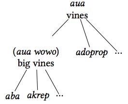 Taxonomy of vines