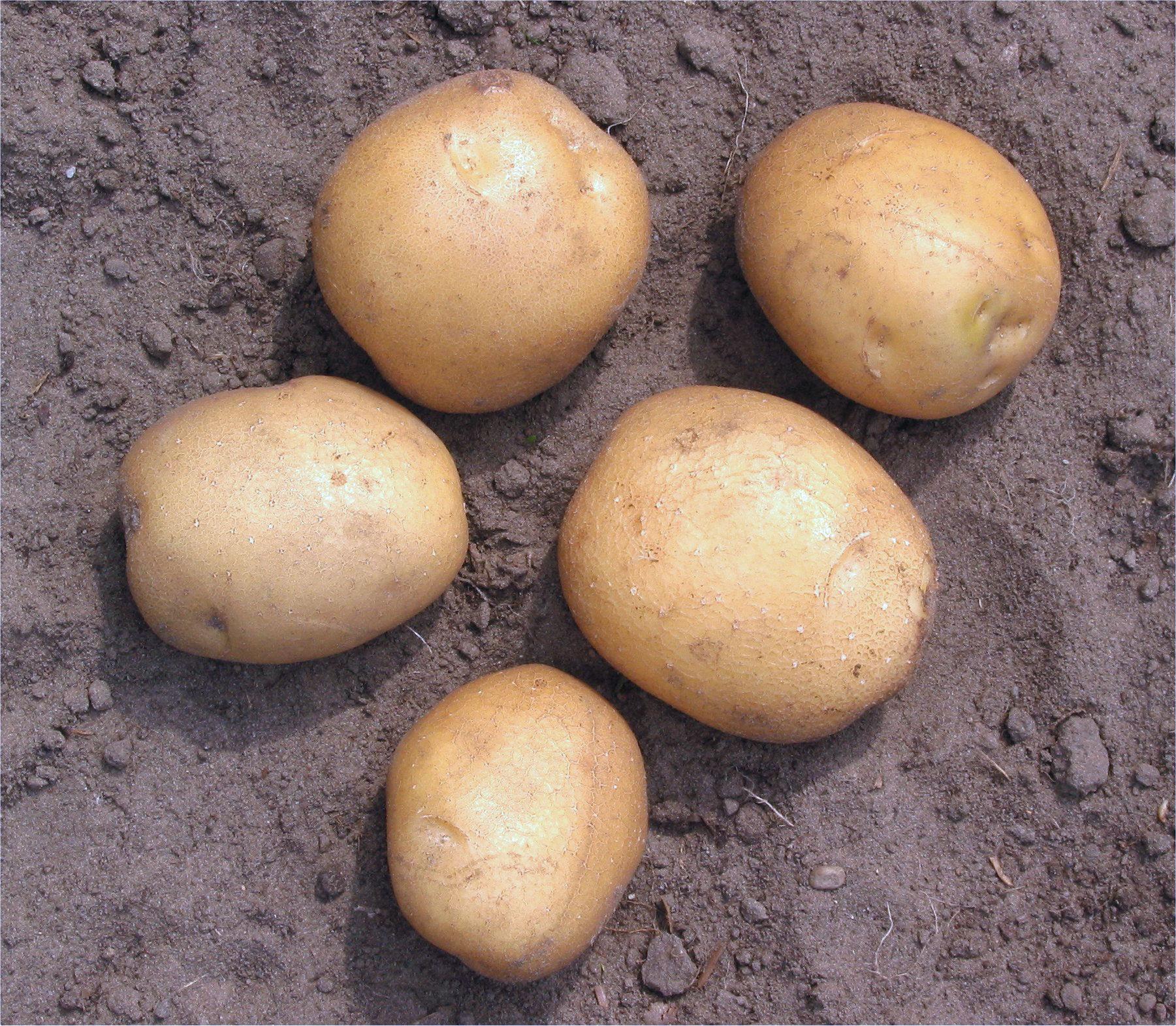 Как приготовить картофель в беконе фото часть парка